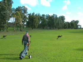 Coffin Bay Golf Club - Byron Bay Accommodations