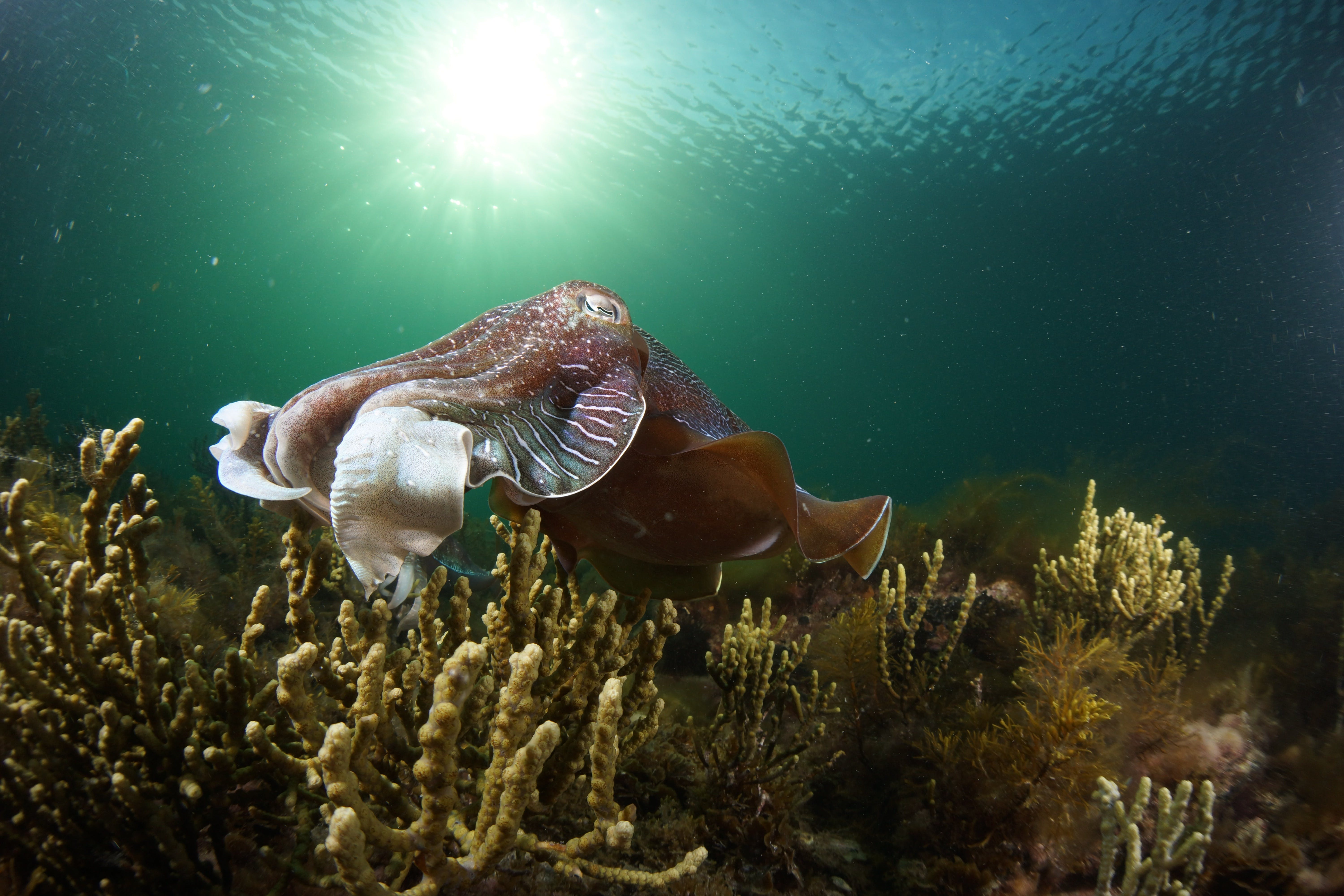 Cuttlefish Diving  Snorkeling EVERYDAY May -August - Byron Bay Accommodations