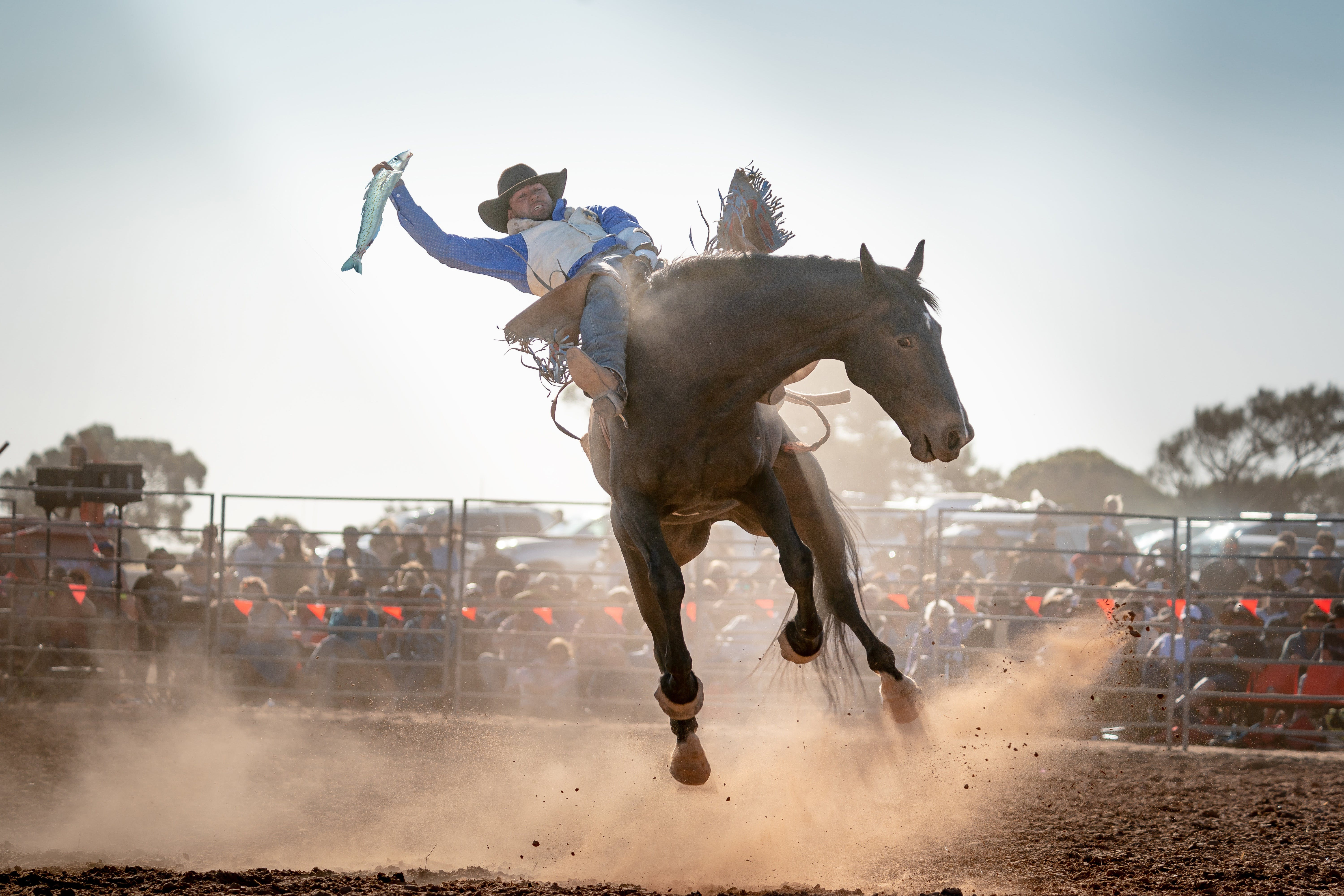 Rodeo by the Sea - Streaky Bay - Byron Bay Accommodations